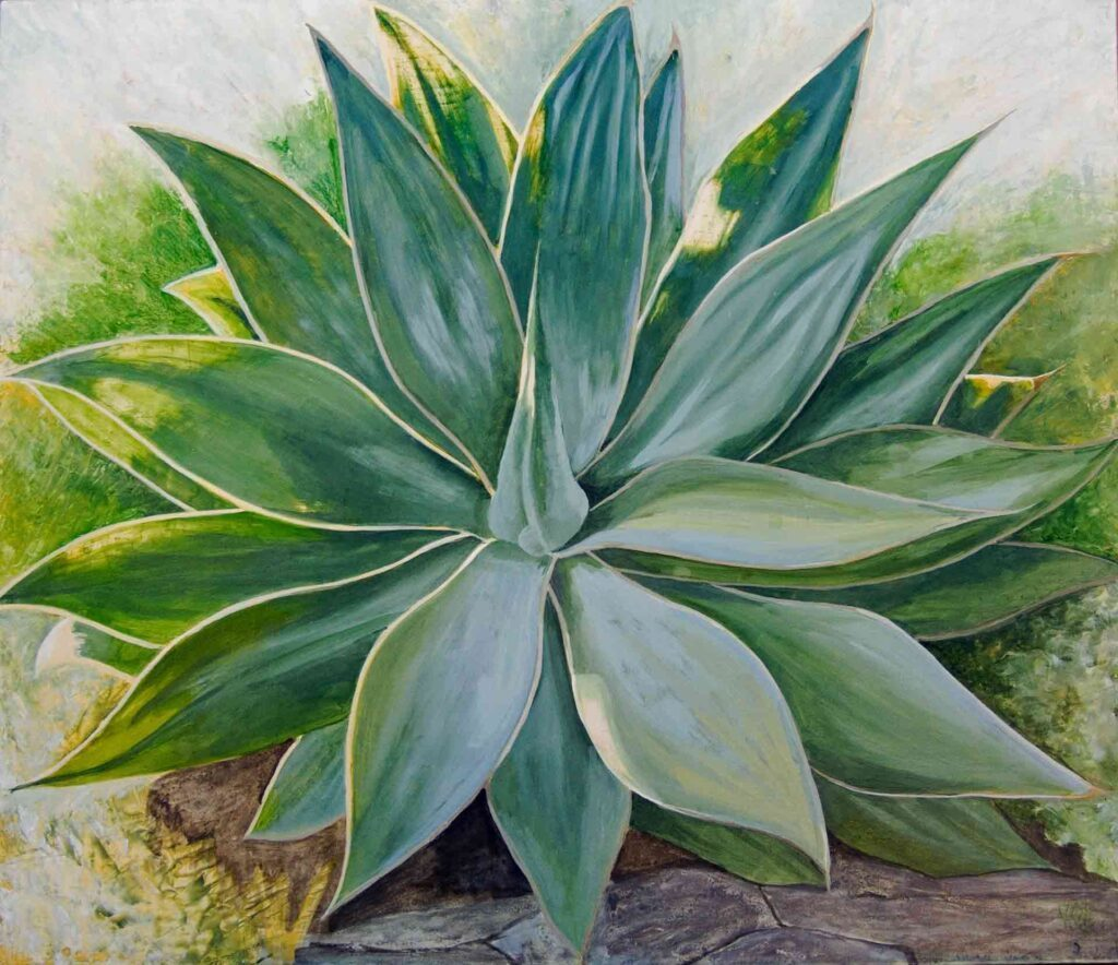 Agave. Still Life Painting by Victoria Orr Ewing