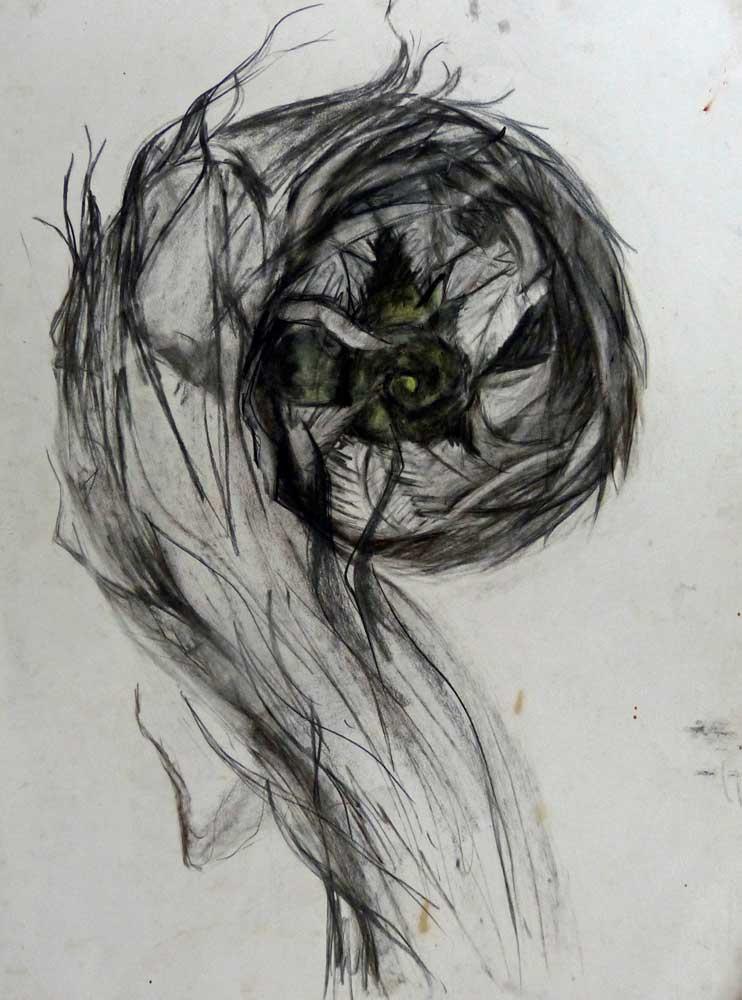 Sketch Of A Baby Fern
