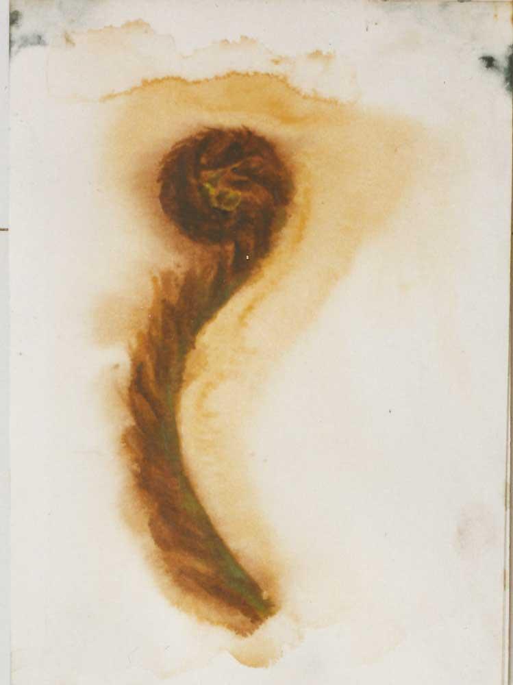 Sketch Of A Fern Frond