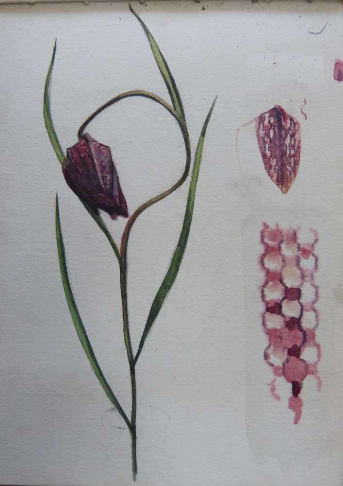 Sketch Of A Fritillary