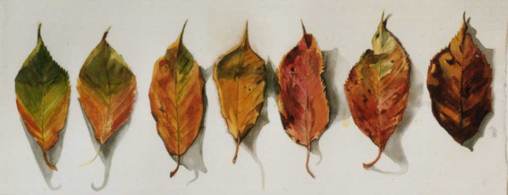 Sketch Of Autumn Leaves