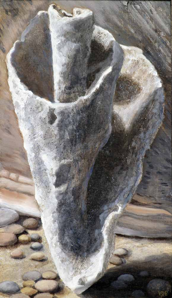Conch Shell 2. Still Life Painting by Victoria Orr Ewing