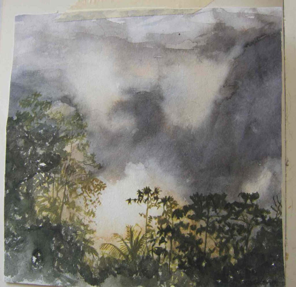 Sketch Of The Forest In Sri Lanka