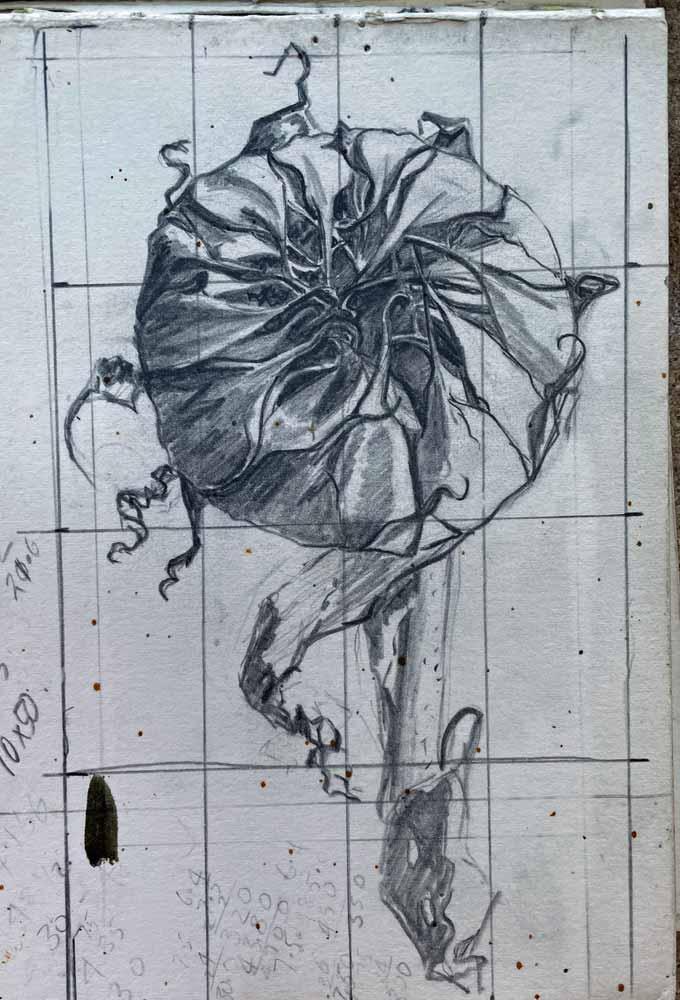 Sketch Sunflower