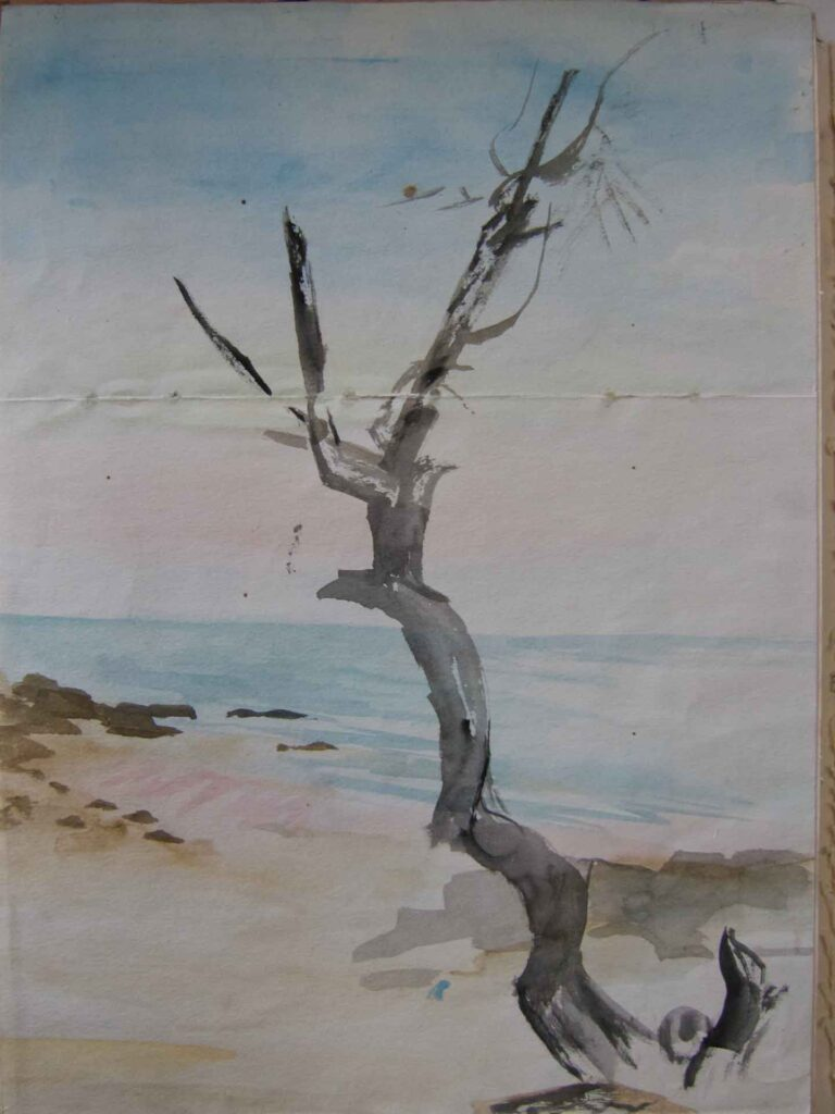 Sketch Of An Old Tree On A Thai Beach