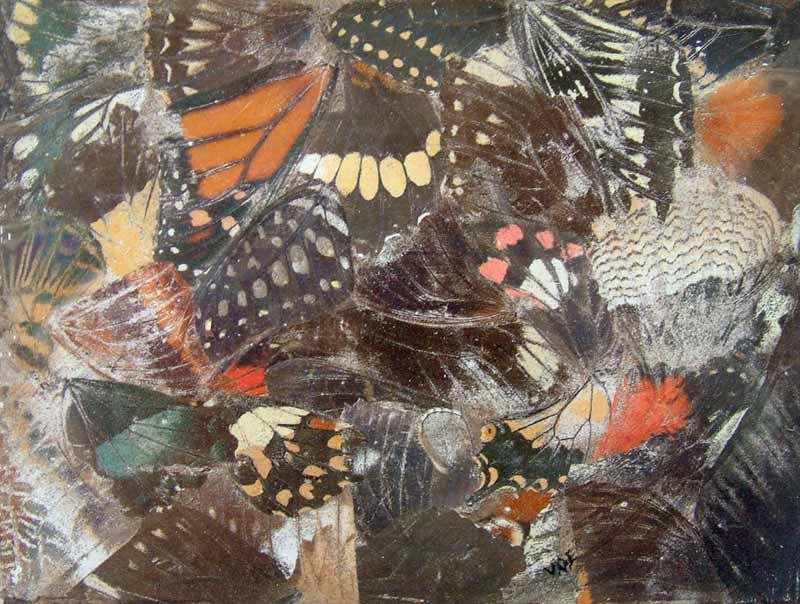 Wing Print 3. Still Life Print by Victoria Orr Ewing